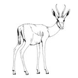 Antelope drawn in ink by hand Stock Photography