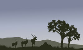 Antelope family silhouette in hills Royalty Free Stock Photography