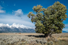 Antelope Flats in Grand Teton, Wyoming royalty free stock images