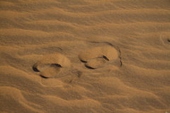Antelope footprints Royalty Free Stock Photos