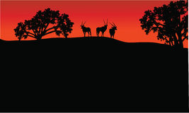 Antelope group in hills scenery Stock Images