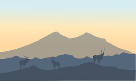 Antelope in hills scenery  of silhouette Royalty Free Stock Photo