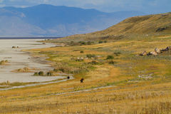 Antelope Island State Park Royalty Free Stock Images
