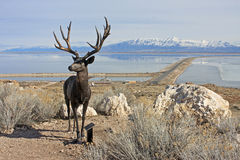 Antelope Island, Utah Royalty Free Stock Photography