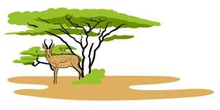 Antelope in savanna, Illustration Stock Image