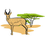 Antelope in savannah Stock Photos