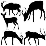 Antelope Silhouettes. Black Illustration, Vector Stock Photos