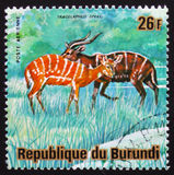 Antelope Sitatunga or marshbuck (Tragelaphus spekii), series Ani. MOSCOW, RUSSIA - FEBRUARY 19, 2017: A stamp printed by Burundi shows antelope Sitatunga or Stock Image