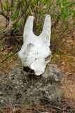 Antelope skull in the Empakai Crater, Great Rift Valley, Tanzania, Eastern Africa Stock Photos