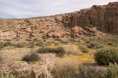 Antelope Valley Poppy Reserve, California, USA Royalty Free Stock Photo