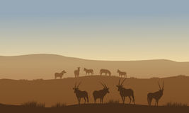 Antelope and zebra on the hills Royalty Free Stock Image