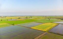 Antena: almofadas de arroz, campo italiano rural cultivado inundado da terra dos campos, ocupação da agricultura, sprintime em Pi foto de stock