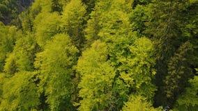 Antena Austriacki wysokogórski lasowy Wildnisgebiet Duerrenstein zbiory wideo