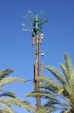 Antena celular disfrazada como palmera Imagenes de archivo