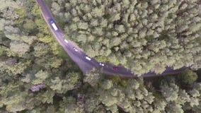 ANTENA: Conducción de automóviles a través de bosque del pino almacen de metraje de vídeo