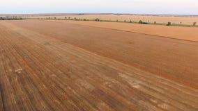 ANTENA: Cosecha de trigo en la puesta del sol almacen de metraje de vídeo