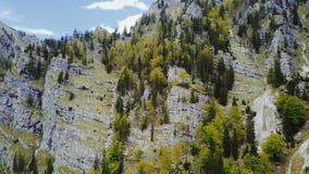 Antena da floresta alpina austríaca Wildnisgebiet Duerrenstein vídeos de arquivo