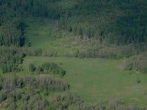 Antena da floresta do abeto Fotografia de Stock