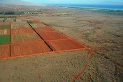 Antena de campos de exploração agrícola das fases diferentes da idade que correm ao Fotos de Stock