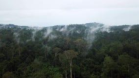 Antena de Cinemagraph del bosque tropical del árbol de Dipterocarp de la selva tropical en la isla de Borneo almacen de video