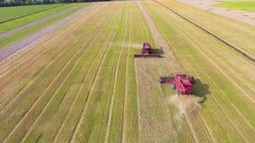 Antena de dos máquinas segadoras rojas que trabajan en campo de trigo grande metrajes