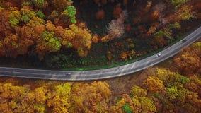 Antena de la conducción de automóviles a través de bosque soleado del otoño almacen de video