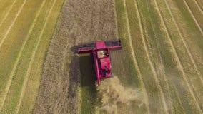 Antena de la máquina segadora roja que trabaja en campo de trigo grande almacen de metraje de vídeo