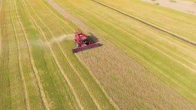 Antena de la máquina segadora roja que trabaja en campo de trigo grande almacen de video