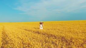 Antena de la mujer joven romántica que camina en campo de trigo de oro en verano metrajes