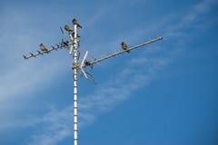 Antena de la TV Fotos de archivo libres de regalías