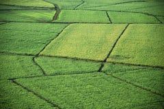 Antena de los campos de la cosecha. Fotografía de archivo