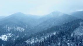 Antena de nevadas sobre las colinas cubiertas con bosque imperecedero del pino Caída de la nieve del invierno en el bosque de la  almacen de video