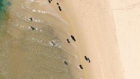 Antena de turistas en el agua poco profunda clara en los turistas rotationAerial lentos de una playa prístina que corren a través almacen de metraje de vídeo