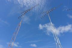 Antena de TV Foto de archivo libre de regalías
