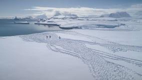 Antena del borde de la nieve del paseo del pingüino del gentoo de la Antártida metrajes