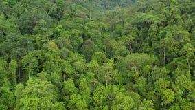 Antena del toldo de la selva tropical en la isla en Papúa Nueva Guinea almacen de metraje de vídeo