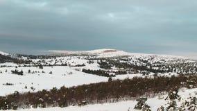 Antena desde arriba de pinos de montaña nevosos en el medio del invierno tiro Alcohol rico del invierno almacen de metraje de vídeo