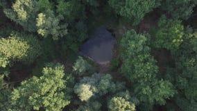 Antena do voo sobre uma floresta verde bonita em uma paisagem rural video estoque