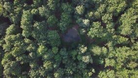 Antena do voo sobre uma floresta verde bonita em uma paisagem rural filme