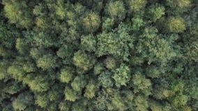 Antena do voo sobre uma floresta verde bonita em uma paisagem rural vídeos de arquivo