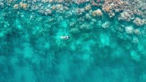 Antena: kobieta snorkeling na rafy koralowej tropikalnym morzu karaibskim zbiory wideo