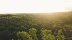 Antena krajobrazowy tropikalny deszcz nad mangową plantacją w azjatykciej wiosce Trutnia latanie podczas gdy deszcz nad owoc ogró zbiory