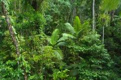 Antena krajobrazowy widok Daintree park narodowy Queensland Austr zdjęcia royalty free