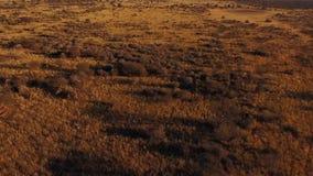 Antena: la sabana de Namibia en la puesta del sol metrajes