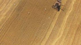 ANTENA: Máquina segadora en campos agrícolas en tiempo de cosecha almacen de metraje de vídeo