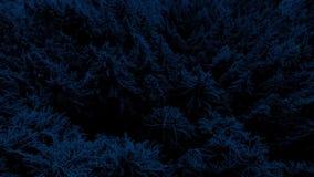 Antena Nad Niewygładzoną Lasową doliną Przy nocą zbiory wideo