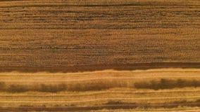 Antena nad widokiem od stronniczo koszącego dojrzałego pszenicznego pola Panoramiczny ruch nad banatką Produkcja rolna chleb zbiory