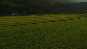 Antena: O fazendeiro anda através do prado filme