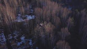 Antena para el quadrocopter que vuela sobre árboles amarillos en último otoño con la nieve blanca en la tierra clip Hermoso almacen de metraje de vídeo