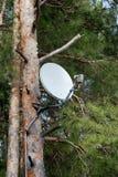 Antena parabólica en un árbol imagenes de archivo